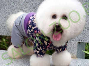 Домашняя и выставочная стрижка, тримминг собак