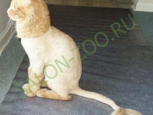 стрижка и вычесывание кошек