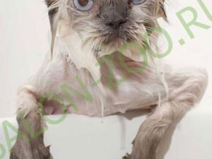 Мытьё, вычесывание кошек