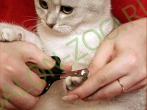 Стрижка когтей; антицарапки кошкам