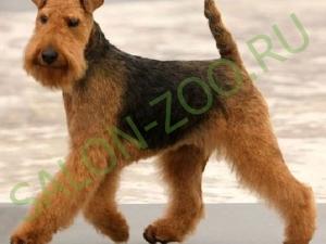 стрижка и тримминг собак