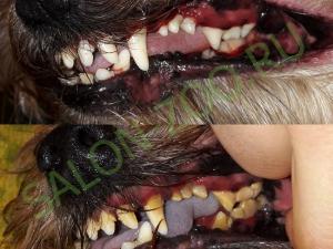 Ультразвуковая чистка зубов БЕЗ вредного НАРКОЗА
